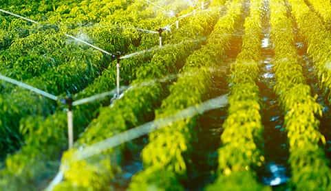 有机是农业现代化的重要目标!